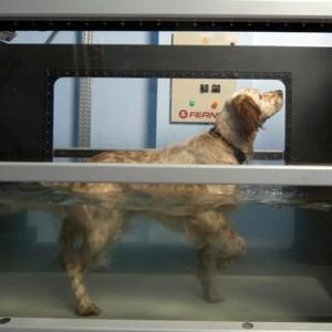 cane in Underwater treadmill