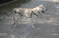 cane su carrellino