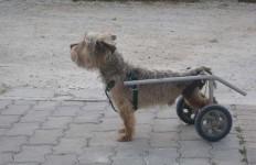 carrellini e ausili per cani