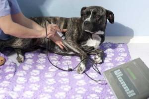 Laser in fisioterapia veterinaria