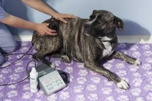 L'ultrasuonoterapia è utile in patologie muscolo-tendinee e dolori articolari