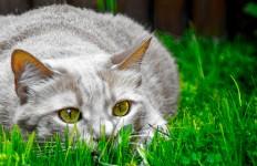 Lussazione completa ginocchio più frequente nel gatto