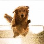 800px-Dog_Jump