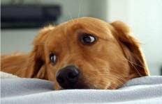 fisioterapia discospondilite cane